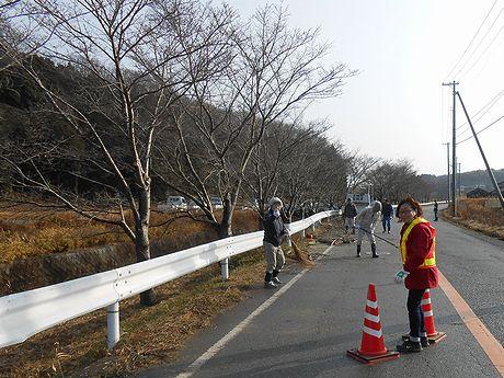 20170121桜の木枝切り